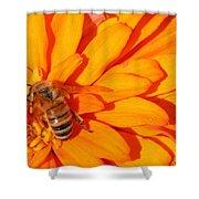 Honeybee On An Orange Zinnia Shower Curtain