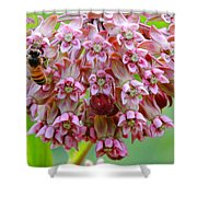 Honeybee On Milkweed Shower Curtain