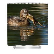Hooded Merganser And Bullfrog Shower Curtain
