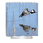 Hooded Merganser Flying Shower Curtain