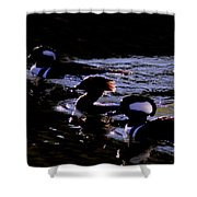 Hooded Mergansers And Moon Glare Shower Curtain