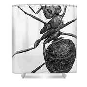 Hooke: Ant, 1665 Shower Curtain