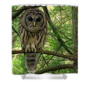 Hoot Hoo Dee Hoo Shower Curtain