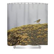 Hopping Blue Bird Shower Curtain