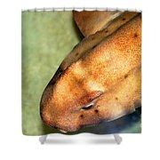 Horn Shark Shower Curtain