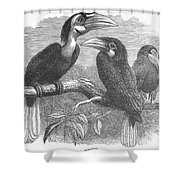 Hornbills Shower Curtain