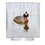 Horned Grebe Shower Curtain