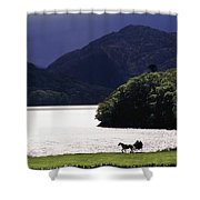 Horse And Buggy By Waterfront Shower Curtain