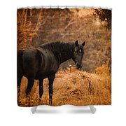 Horse And The Haystack Shower Curtain