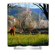 Horse At Field Shower Curtain
