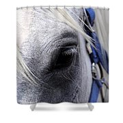 Horse At Mule Day Benson Shower Curtain