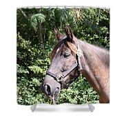Horse At Mule Day In Benson Shower Curtain