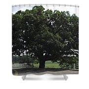 Horse Barn Hill Uconn  Shower Curtain