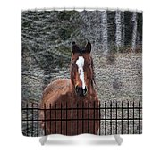 Horse Behind The Fence Shower Curtain