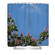Horse Chestnut Shower Curtain