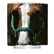 Horse Face Shower Curtain