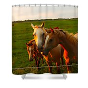 Horse Family Soft N Sweet Shower Curtain