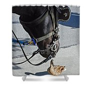 Horse Feathers Shower Curtain