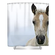 Horse Foal Shower Curtain
