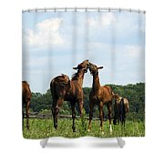 Horse Foul Play II Shower Curtain