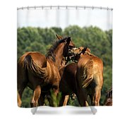 Horse Foul Play IIi Shower Curtain