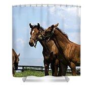 Horse Foul Play Vi Shower Curtain