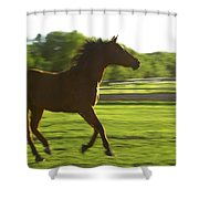 Horse Galloping Shower Curtain