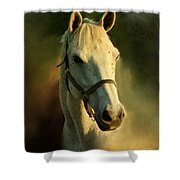 Horse Head Portriat Shower Curtain