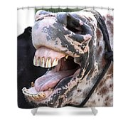 Horse Humor Shower Curtain