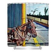 Horse In Malate Shower Curtain