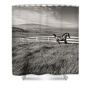 Horse In Pasture Shower Curtain