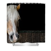 Horse In The Stable Shower Curtain