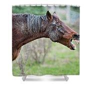 Horse Laugh Shower Curtain