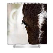 Horse Mare Saskatchewan Field Shower Curtain