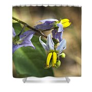 Horse Nettle Nightshade - Solanum Carolinense Shower Curtain