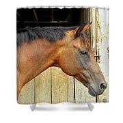 Horse Portrail Shower Curtain