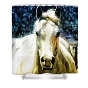 Horse Sense Shower Curtain