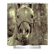 Horse Stare Shower Curtain