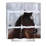 Horse Viewed Through Frost Covered Wire Fence Shower Curtain