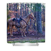 Horse Waiting For Rider Shower Curtain