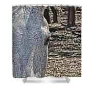 Horse With No Name V2 Shower Curtain