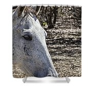 Horse With No Name V3 Shower Curtain