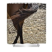 Horse With No Name V4 Shower Curtain