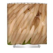 Horsefly Eggs Shower Curtain
