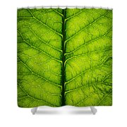 Horseradish Leaf Shower Curtain