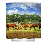 Horses At The Ranch Shower Curtain