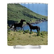 Horses By The Sea Shower Curtain
