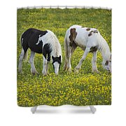 Horses Grazing, County Tyrone, Ireland Shower Curtain