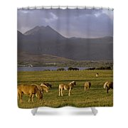 Horses Grazing, Macgillycuddys Reeks Shower Curtain