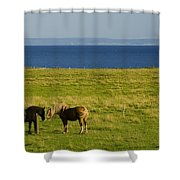 Horses In A Field, Guernsey Cove Shower Curtain